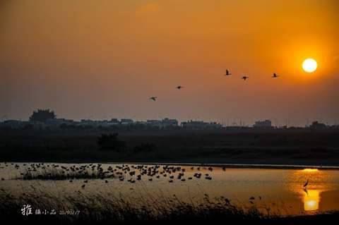 1080515養工-茄萣濕地的夕陽美景.jpg