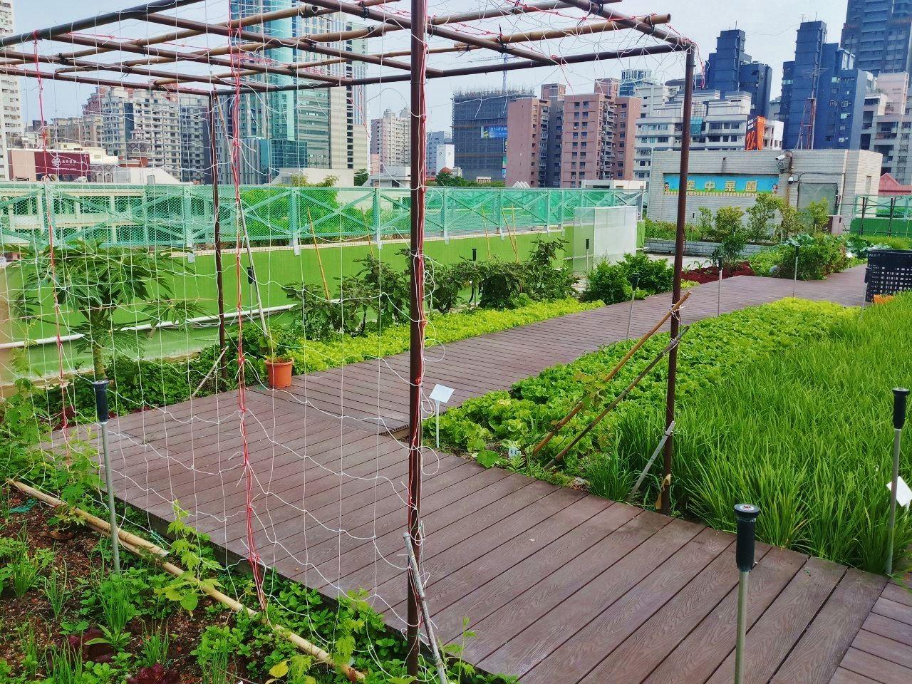 三民家商空中菜園創造出獨特的空中有機廚房.jpg